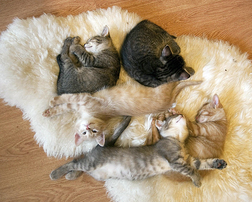 cute kittens sleepy cat pic
