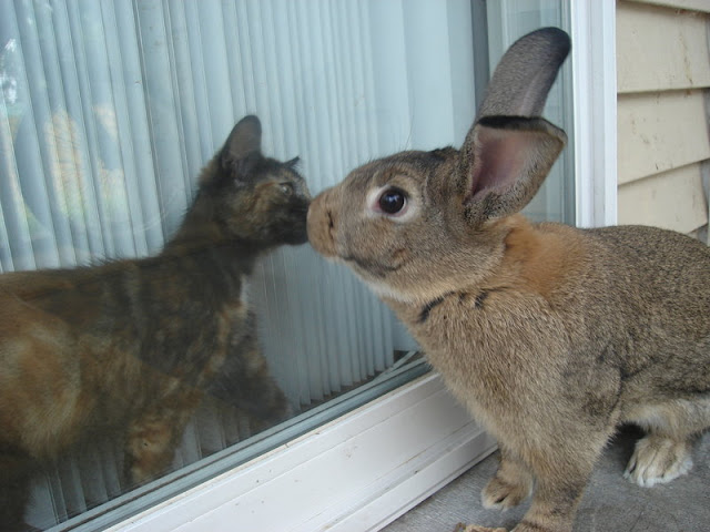 cute kitten kissing bunny easter pic