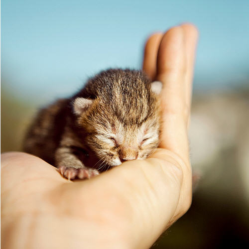 cute kitten in palm