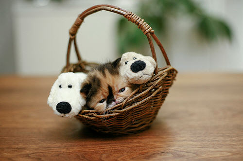 cute calico kitten snoozing in basket
