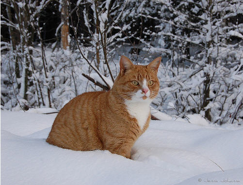 cute ginger cat sitting on snow