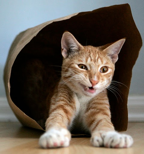 cute bengal cat in paper bag