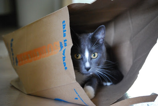 cute cat in paper bag
