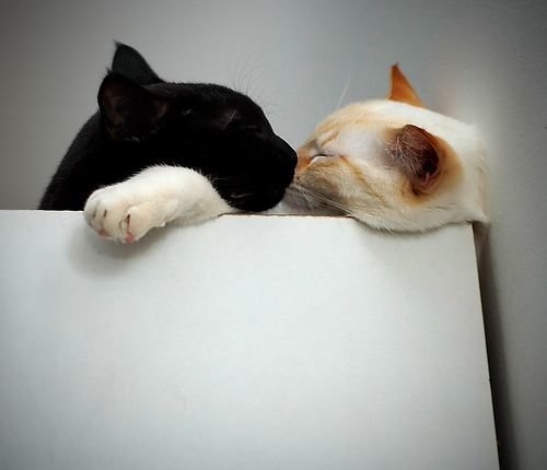 cute cats napping and kissing