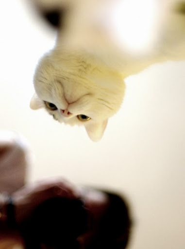 cute cat looking down upon you