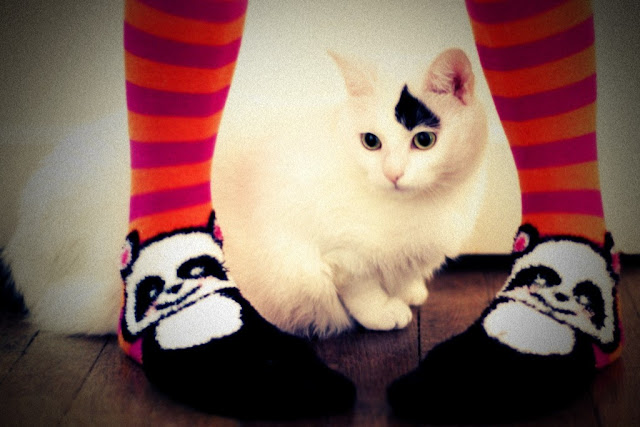 cute cat and panda socks