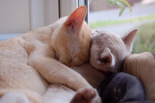 cute cats cuddling each other