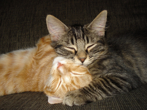 cute kittens cuddling