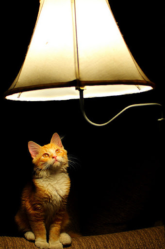 cute ginger cat watching fly in the lamp