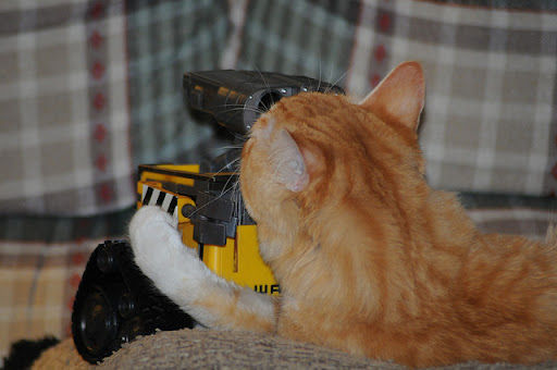 cute ginger cat kisses wall-e