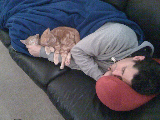 cute ginger kittens sleeping with daddy
