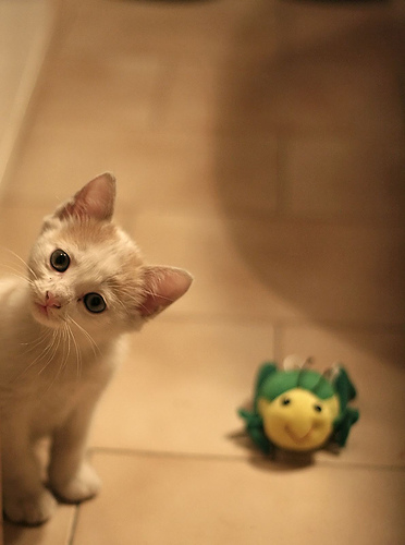 cute kitten and a stuffed toy