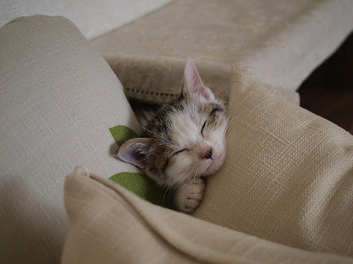 cute kitten snoozing
