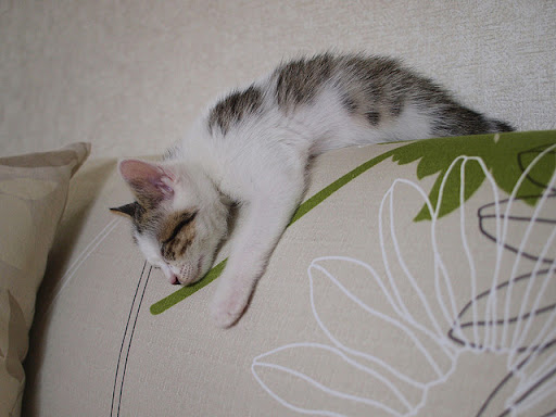 cute kitten taking a nap