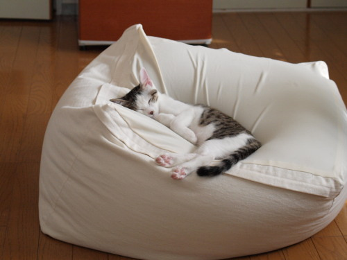 cute kitten sleeps in a bean bag
