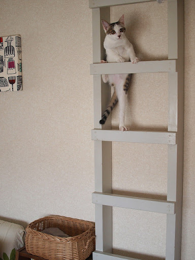 cute kitten climbing ladder