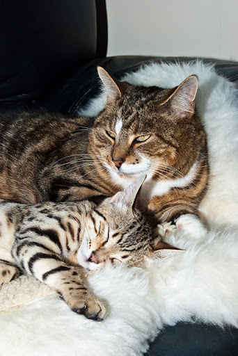 cute kitten and cats sleeping together
