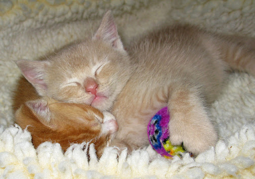 cute foster kittens taking a nap snoozing