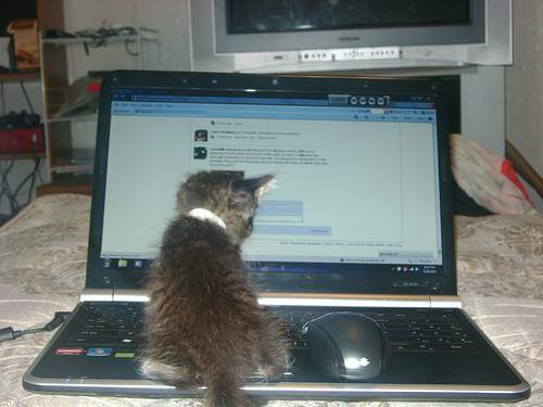 cute kitten on laptop