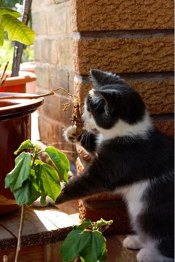 cute blind cat checking out a plant