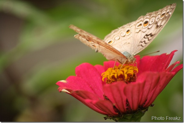Beauty of Nature Butterfly