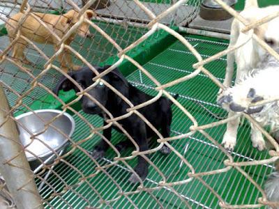 [Dog]再訪小黑 & 不合常理的動保法!