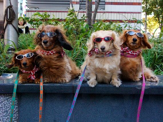 tokyo-perros