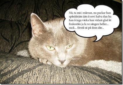 Katten Bamsan_edited