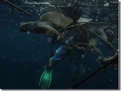 Sköldpadda räddas
