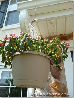 hanging_flower_basket