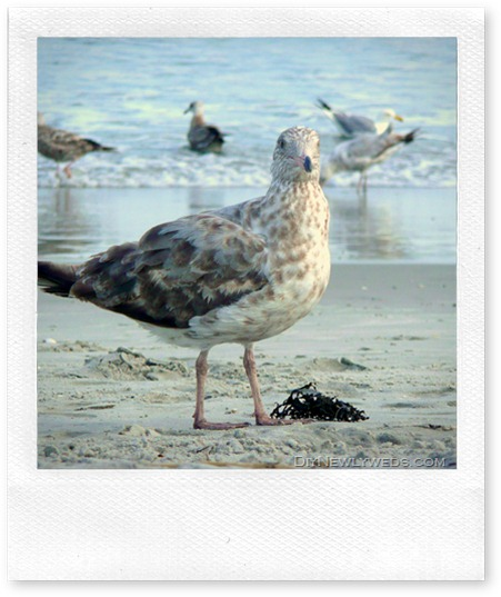 beach seagull