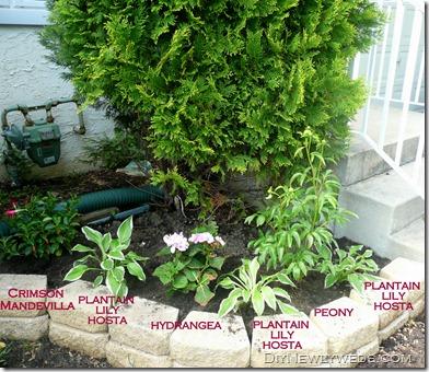 garden-perennials