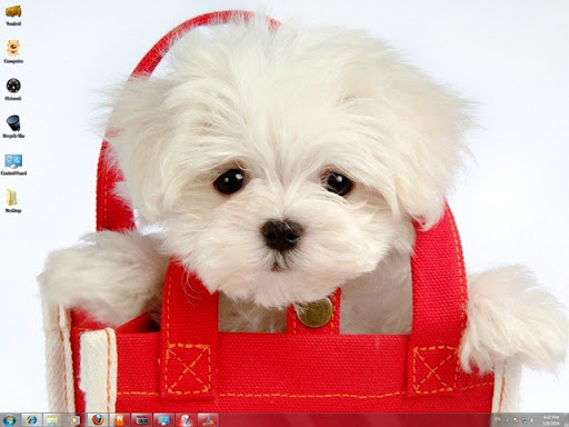 funny pictures of dogs and puppies. Download Free Cute Puppies Windows 7 Theme With Dogs Icons, Funny Sounds