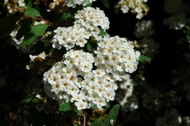 nomes de plantas lookalike
