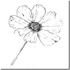 Intro to Botanical Illustration - 1