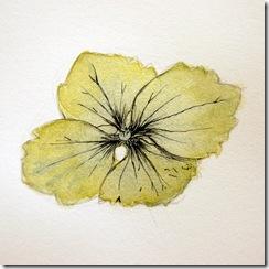 Intro to Botanical Illustration - 2