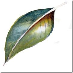 Intro to Botanical Illustration - Fiona McKinnon