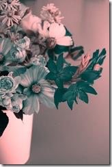 Mitty's flowers 5