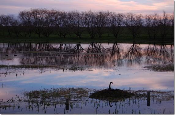 Mepunga wetland