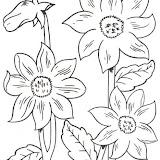 flores_3.jpg