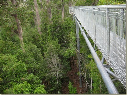 tasmanian tiger sightings
