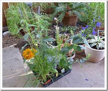 101015_new_plants2