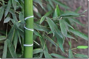 101114_bamboo_closeup