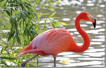 101114_flamingo_bamboo