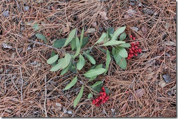 101121_UCDA_toyon_bouquet