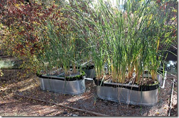 101121_UCDA_wetland_experiment