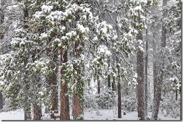 101127_new_snow_03_sm