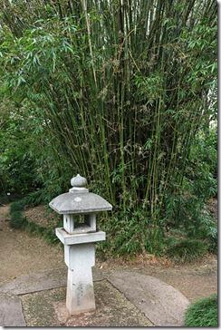 Bambusa-ventricosa-Royal-Bot-Garden-Sydney_01
