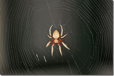 spider_unknown_sp