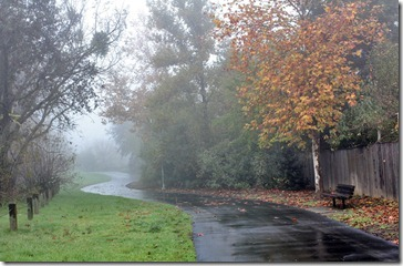 101205_fog_greenbelt2